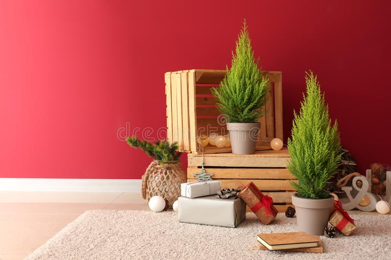 Thuya trees with Christmas gifts and decor near color wall stock photography