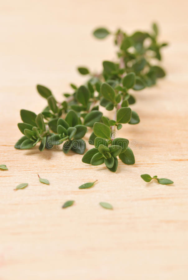 Download Thyme stock image. Image of herb, aromatic, leaves, fresh - 22190903