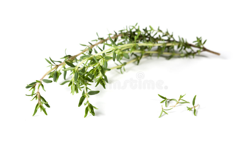 Thyme Branch And Leaves Royalty Free Stock Photos