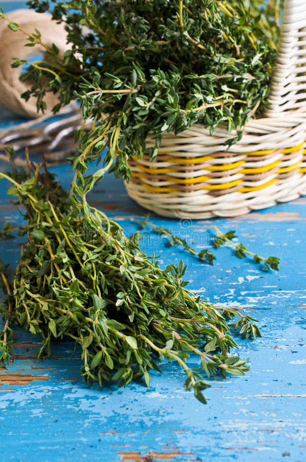 Thyme. Bunch of green sprigs of thyme on the background of the old boards are painted in blue color stock photos