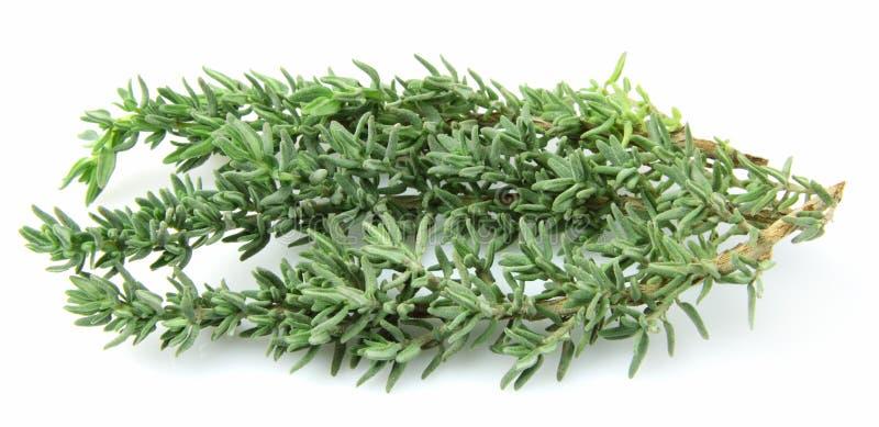 Download Thyme herb stock image. Image of aromatherapy, bush, stem - 22976451