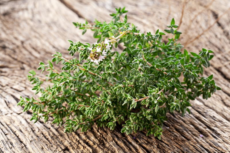 Download Thyme herb. stock photo. Image of aroma, background, cuisine - 28163616