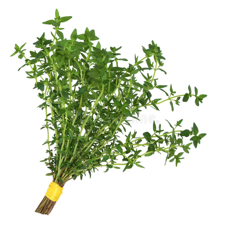Download Thyme Herb Leaf Posy stock photo. Image of herb, medicine - 15929620