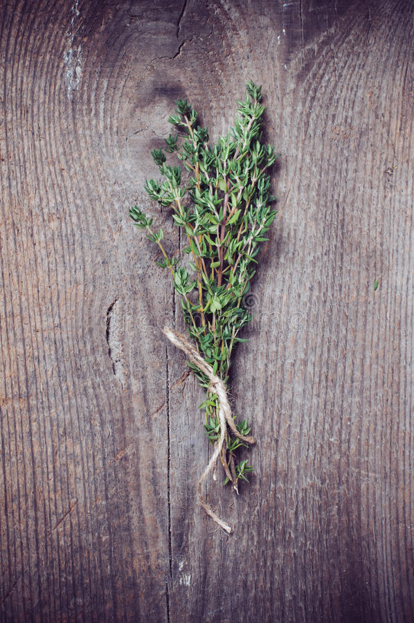 Thyme herb royalty free stock images