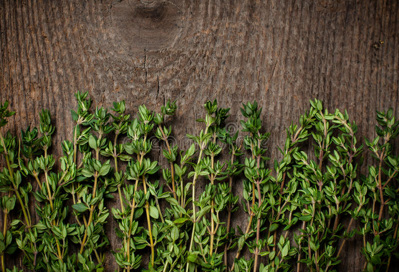 Thyme herb stock image