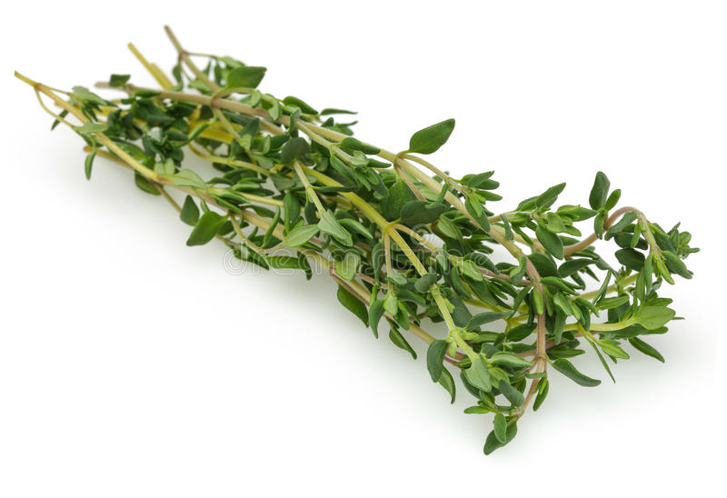 Thyme Herbs. Thyme isolated on white background royalty free stock photography
