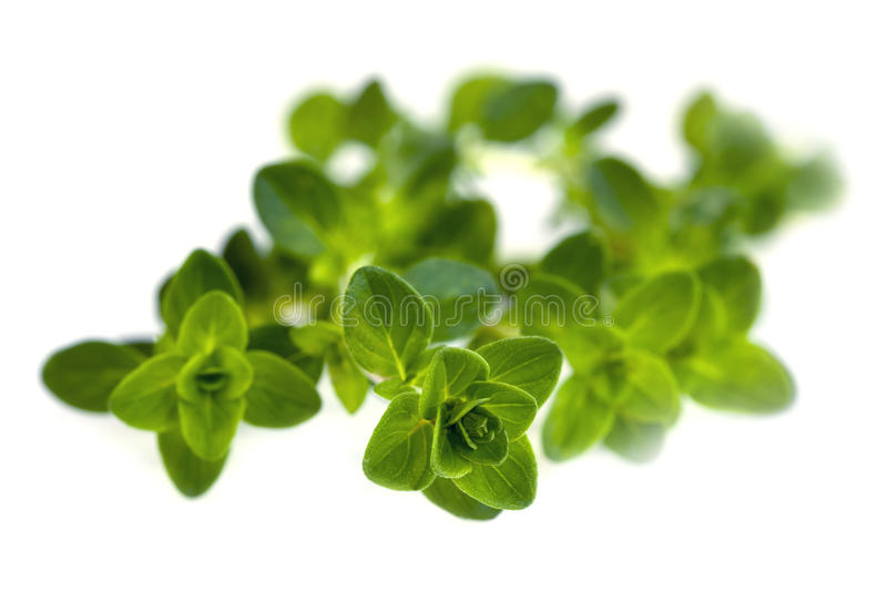 Download Thyme Isolated Royalty Free Stock Photos - Image: 28598608