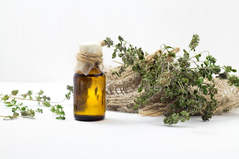 Thyme oil skincare. Bottle of herbal extract, aromatic fresh green twigs. stock photos