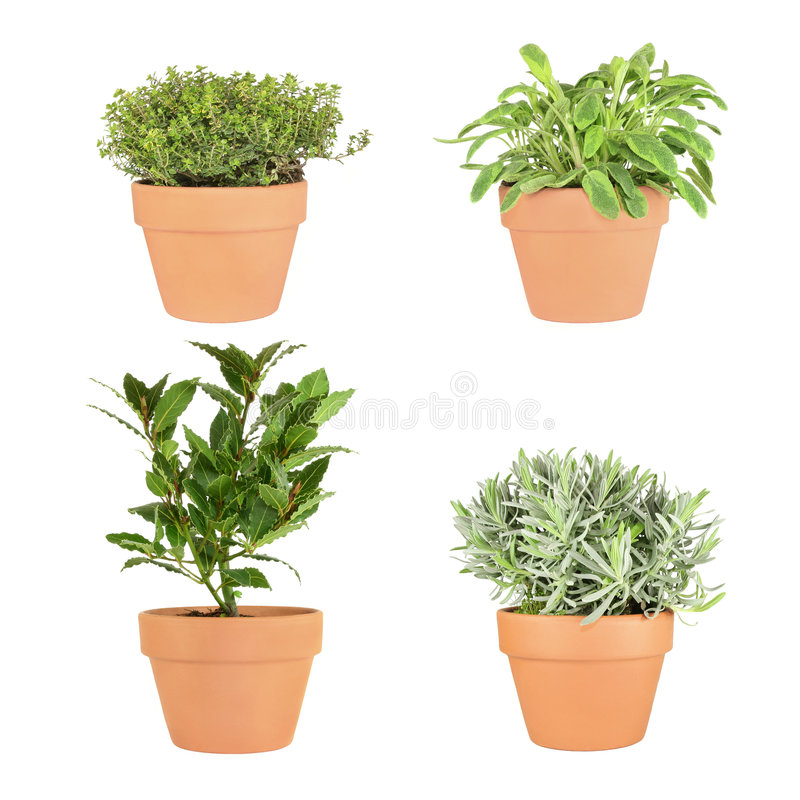 Thyme, Sage, Bay And Lavender Herbs Stock Image