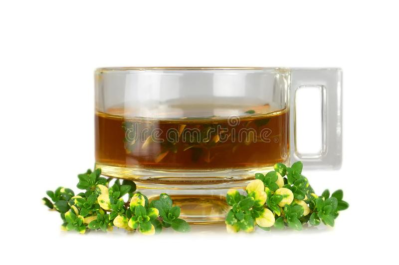 Thyme tea in glass cup isolated on white royalty free stock photos