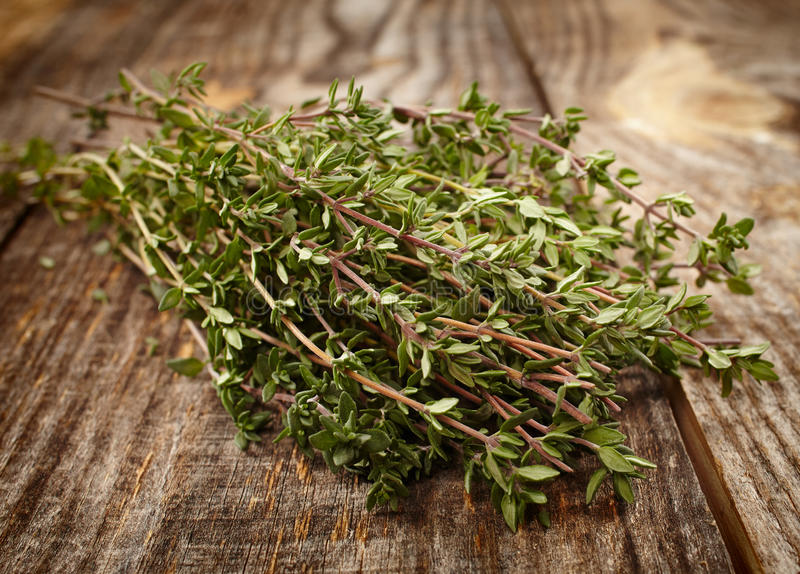 Thyme twigs stock image