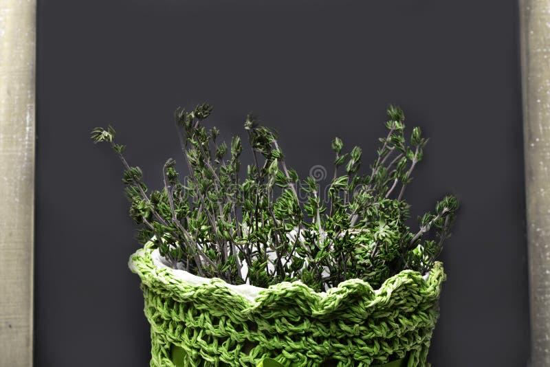 Thymian im grünen Topf stockfotos
