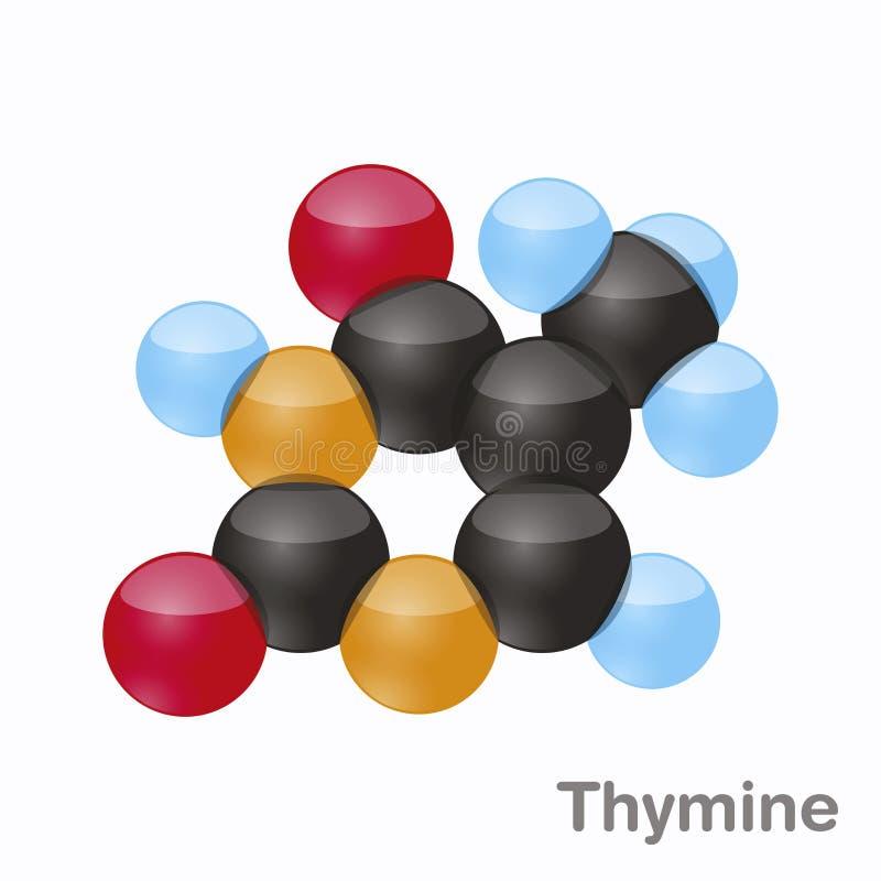 Thymine, T Molécule de nucleobase de purine Base actuelle en ADN illustration du vecteur 3d sur le fond blanc illustration libre de droits
