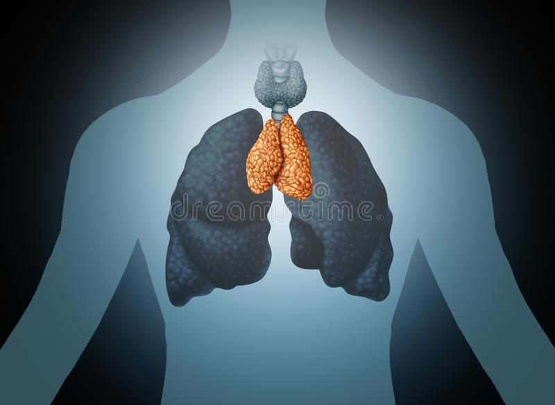 Thymus Human Organ. And gland anatomy with lungs and thyroid in a 3D illustration style stock illustration