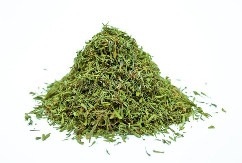 Thymusdrüse lizenzfreies stockfoto