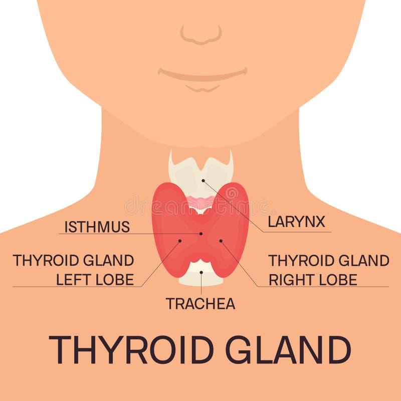 Thyroid Gland Of A Man Stock Vector Illustration Of Hyperthyroidism