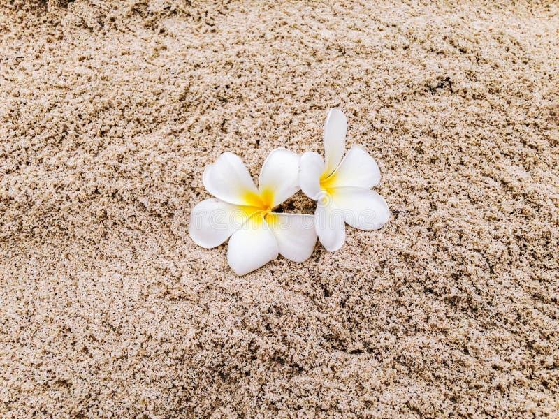 Tiaré blommor på sanden royaltyfri bild