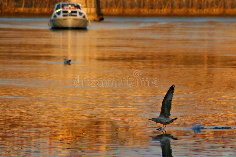 Tiber River At Sunset. Royalty Free Stock Photography