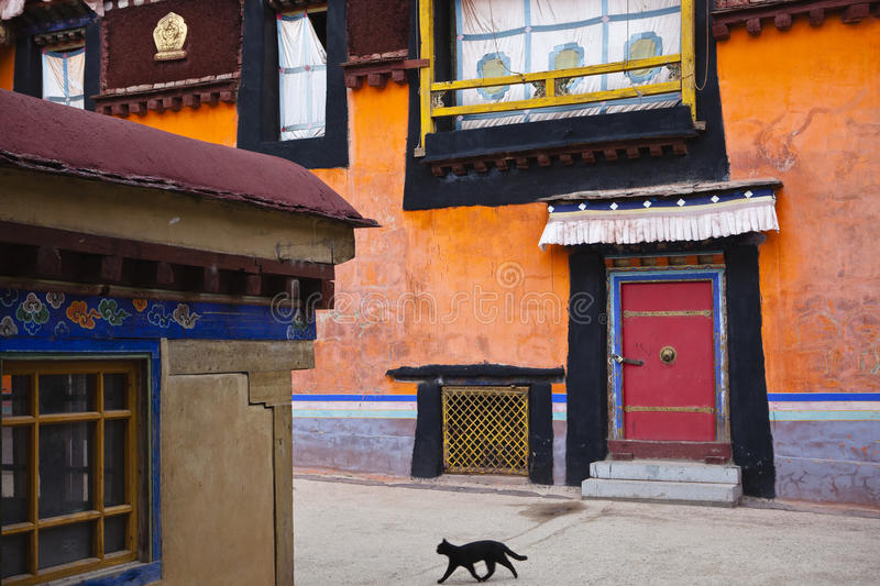 Tibet: buildings in jokhang temple. Black cat walking through buildings in jokhang temple, lhasa, tibet royalty free stock photography