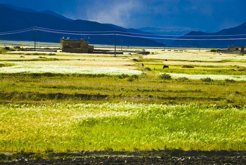 Tibet-Felder lizenzfreies stockbild