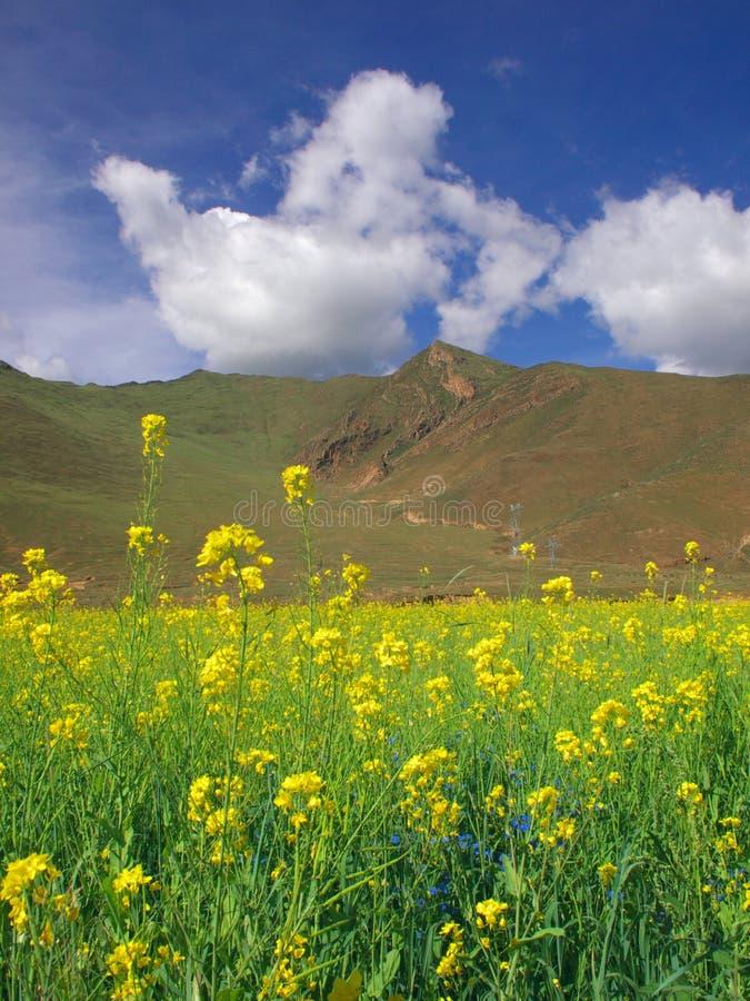 Tibet landscape stock photography