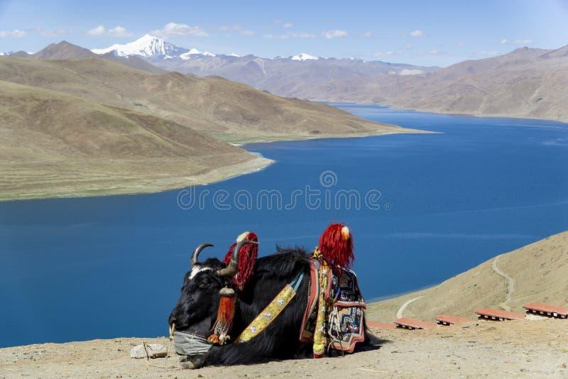 Tibet now China, panoramic view of Lake Yamdrok.  stock image
