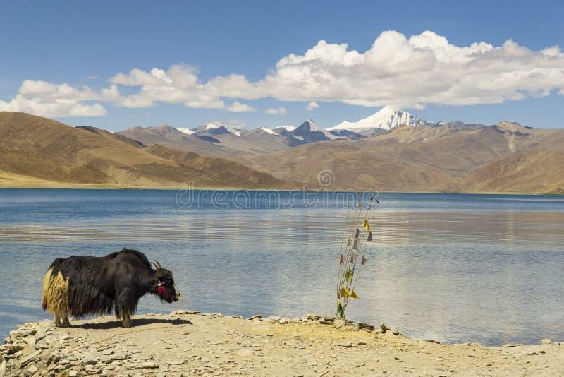 Tibet now China, panoramic view of Lake Yamdrok.  royalty free stock image