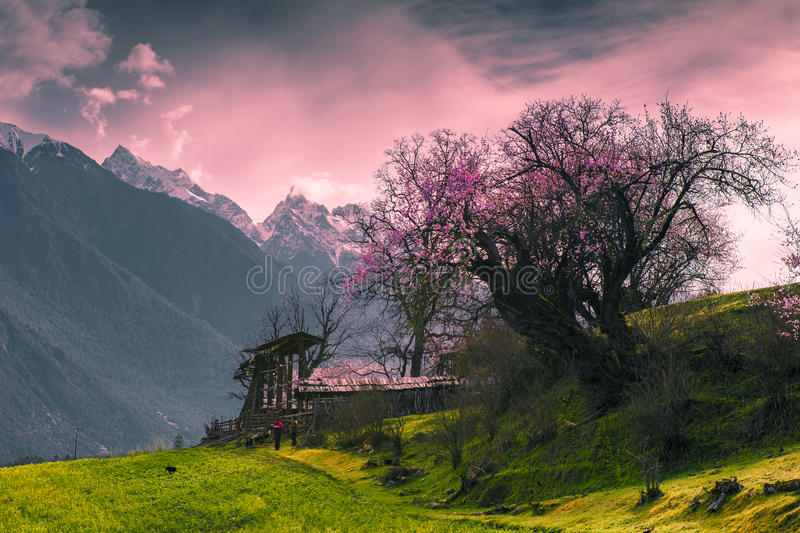 Tibet's spring royalty free stock images