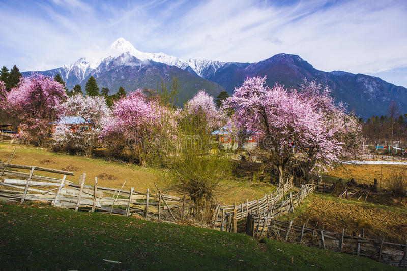 Tibet's spring royalty free stock photo