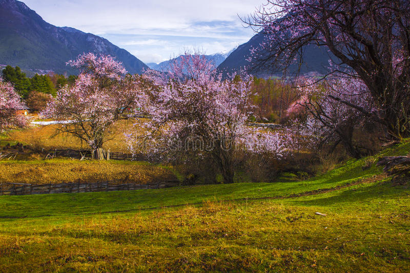 Tibet's spring royalty free stock photography