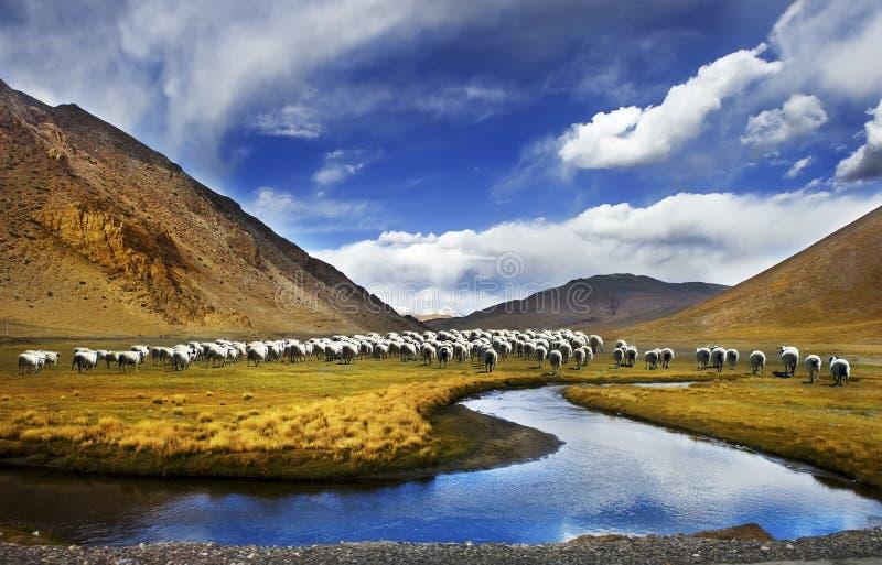 Tibet scenery of China royalty free stock image