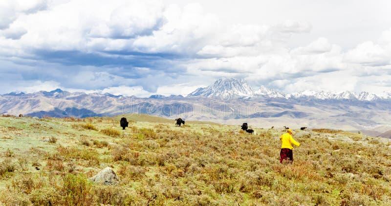 Tibetaanse momads en Yaks door Tagong weide in China royalty-vrije stock afbeelding