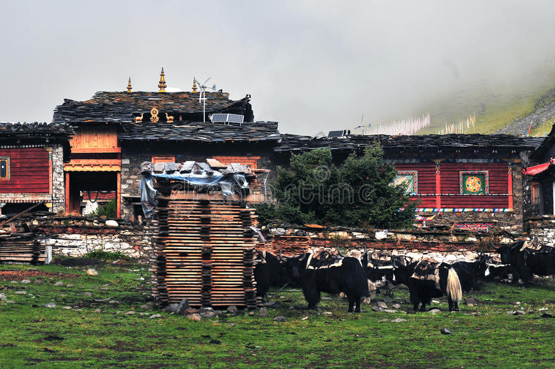 tibetan by arkivfoto