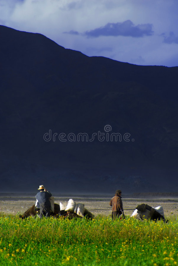 Tibetan farmers in field. A view of a group of farmers working in a field or meadow near Lake Yamdrok Tso in Tibet with a tall, dark mountain in the background stock photos