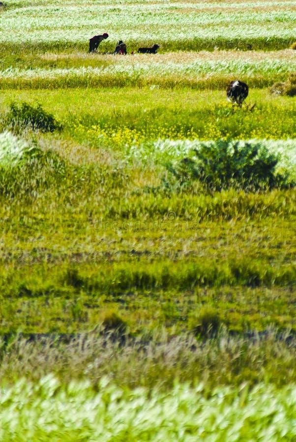 Tibetan landbouwlandschap stock afbeeldingen