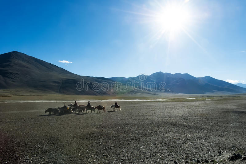 Tibetan nomads travelling with hourses and yaks. Ladakh highland royalty free stock photo