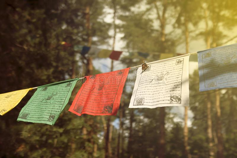Five color flags in the forest, sunny day royalty free stock photos