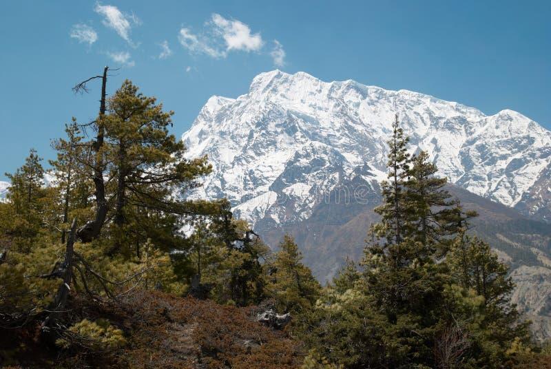 Tibetan road with firs in Himalayan mountain royalty free stock photo