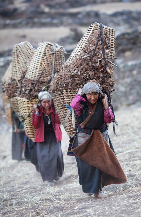 Tibetan womans met mand stock afbeeldingen