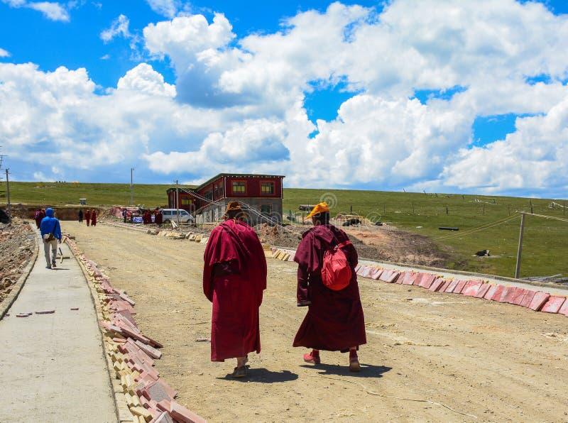 Tibetana munkar som sitter på kullen royaltyfria foton