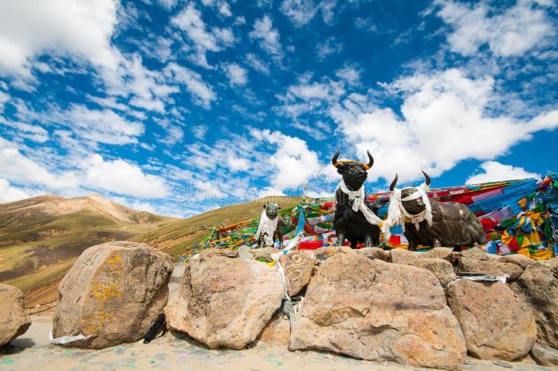 Tibetanische Hochebene - ein großes Abenteuer lizenzfreie stockfotografie