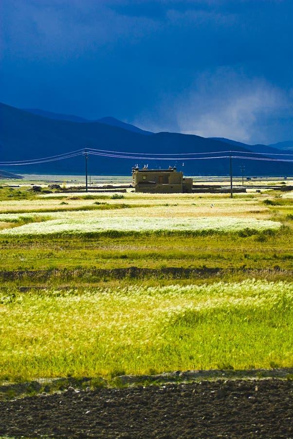Tibetanische landwirtschaftliche Landschaft stockbild