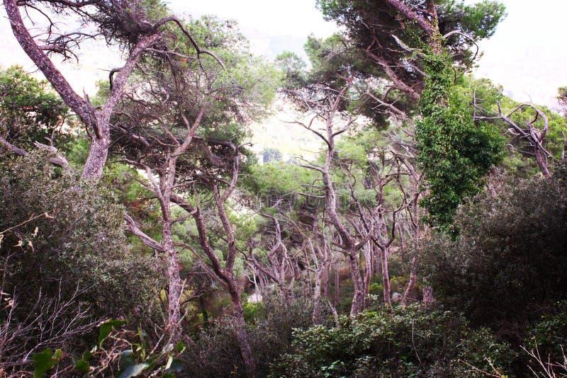 Tibidabo woods stock photo