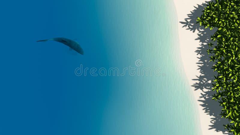 Tiburón cerca de una playa imagen de archivo