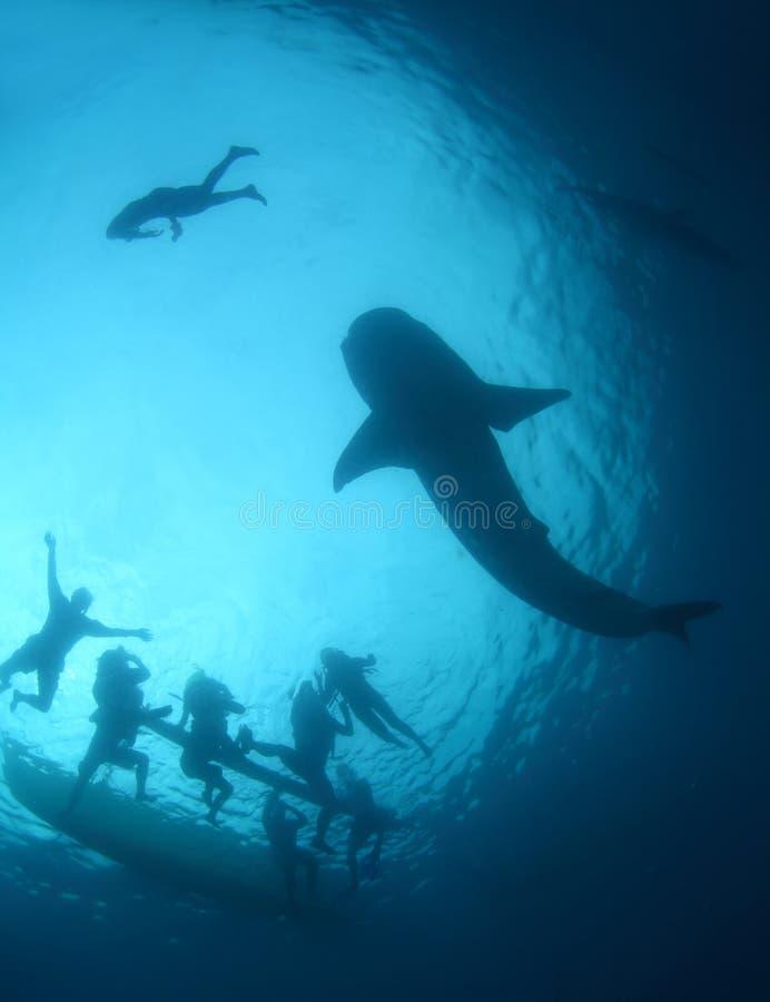 Tiburón de ballena fotos de archivo