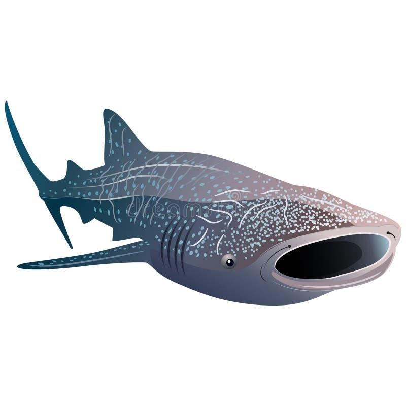 Tiburón de ballena de la historieta aislado en el fondo blanco stock de ilustración
