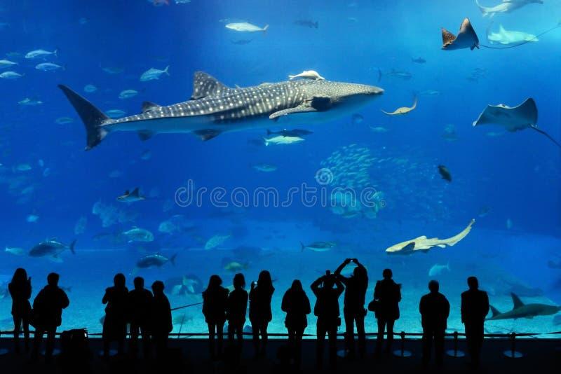Tiburón de ballena y rayos de manta del acuario de Okinawa fotografía de archivo libre de regalías