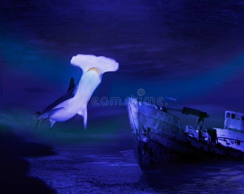 Tiburón de Hammerhead imagen de archivo