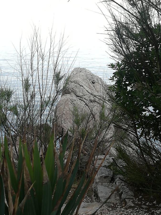 Tiburón de la roca fotografía de archivo libre de regalías