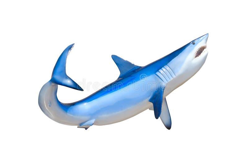Tiburón de Mako que muestra nadar de los dientes aislado fotografía de archivo libre de regalías